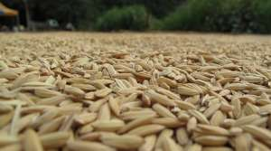 Read full article: Area Doctors, WISPIRG Call For More Restrictions On Animal Feed Antibiotics