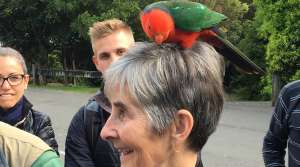 King Parrot on Jude's head - photo by Allen Rieland