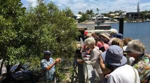 Noosa River Eco-Tour, Queensland - Photo by Allen Rieland