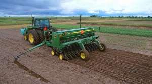 farmer plants foxtail millet