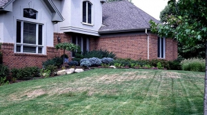 Chinch, lawn, lawn damage, brown spots