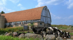 farm scene with barn and cows