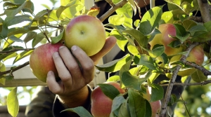 Read full article: As Harvest Begins, Wisconsin Apple Orchards Hope Customers Return With New COVID-19 Practices