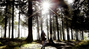 Woman Walking Woods Forest Sun Thinking Nature