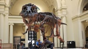 A T-Rex skeleton