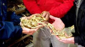 Read full article: World's First International Ginseng Festival Planned For Wausau Area