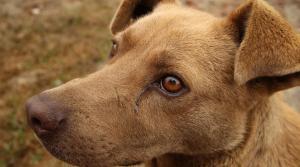 dog with runny eye