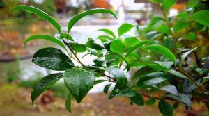 tree branch in rain