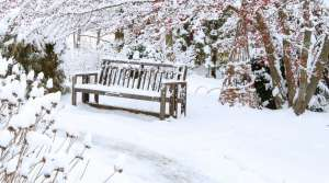 bench in garden in winter