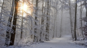 Snowy forest trail.