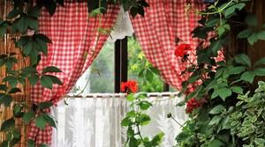 Plants growing inside next to window.