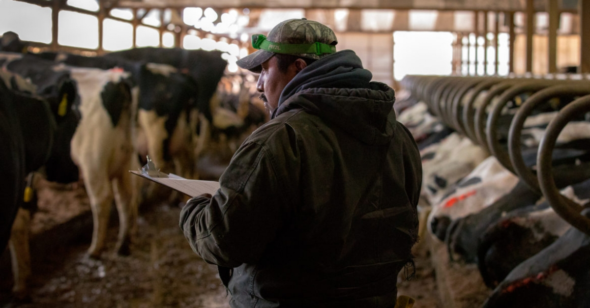 As Trump Calls For Immigration Crack Downs, Dairy Industry Worries