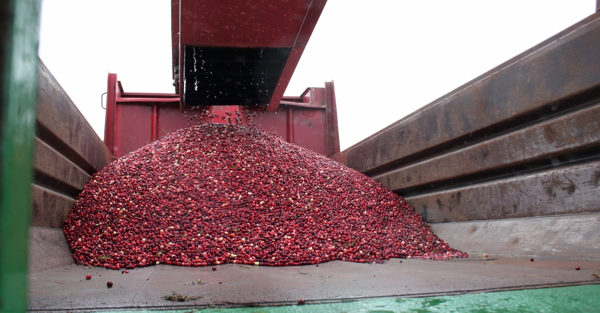 Wisconsin Cranberry Growers Hopeful About Market Future After 2 Years