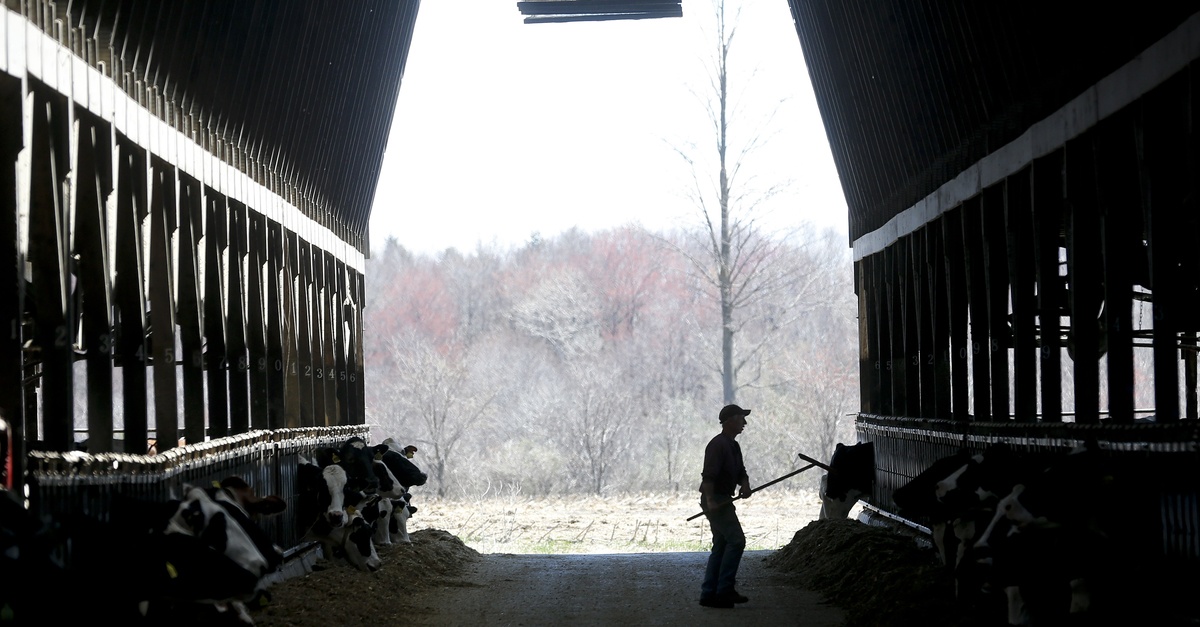 Dairy Groups Call For Crop Insurance Changes As Wet Spring Worsens Livestock Feed Shortage