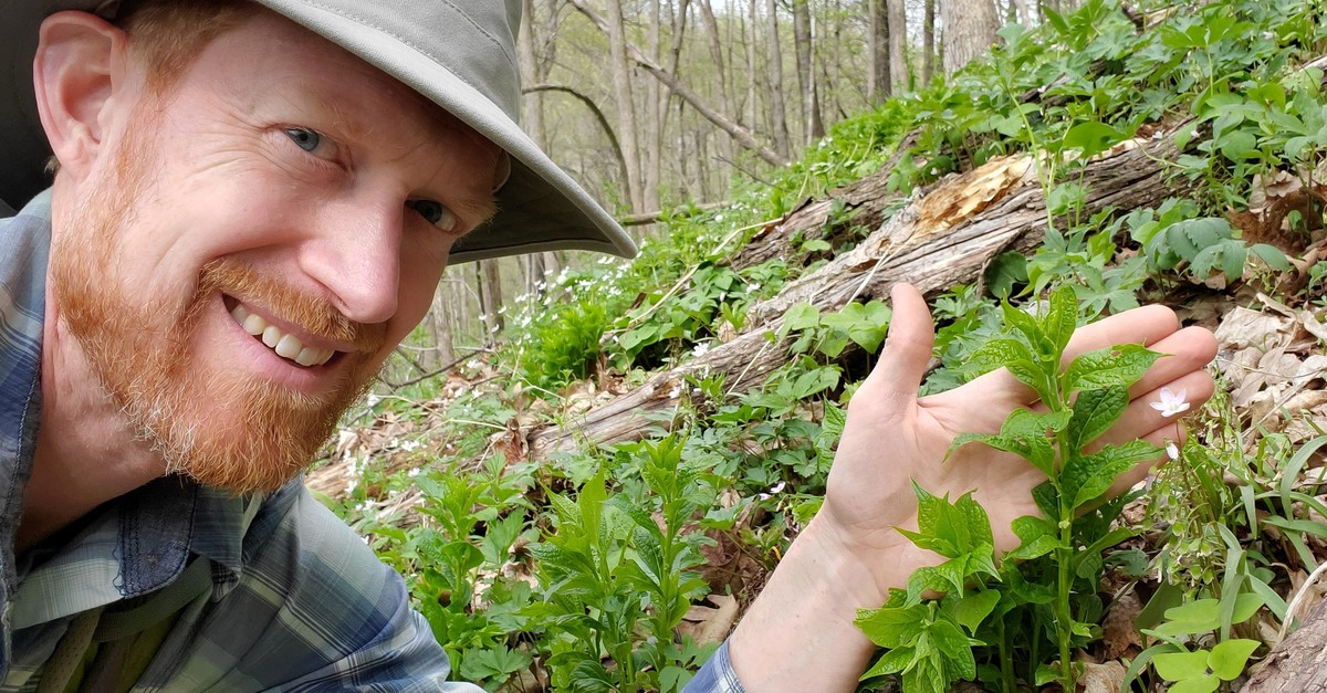 Conservation Biologist Finds Rare Wildflower In West-Central Wisconsin