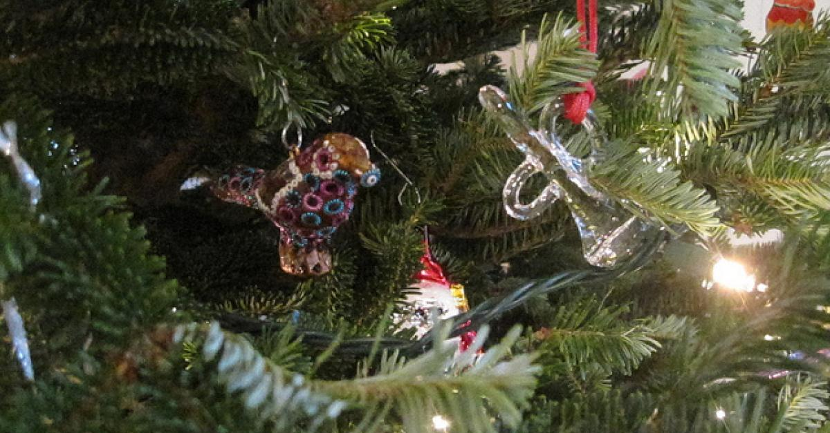 Bugs In Christmas Trees.Is Your Christmas Tree Giving Bugs Access To Your Home