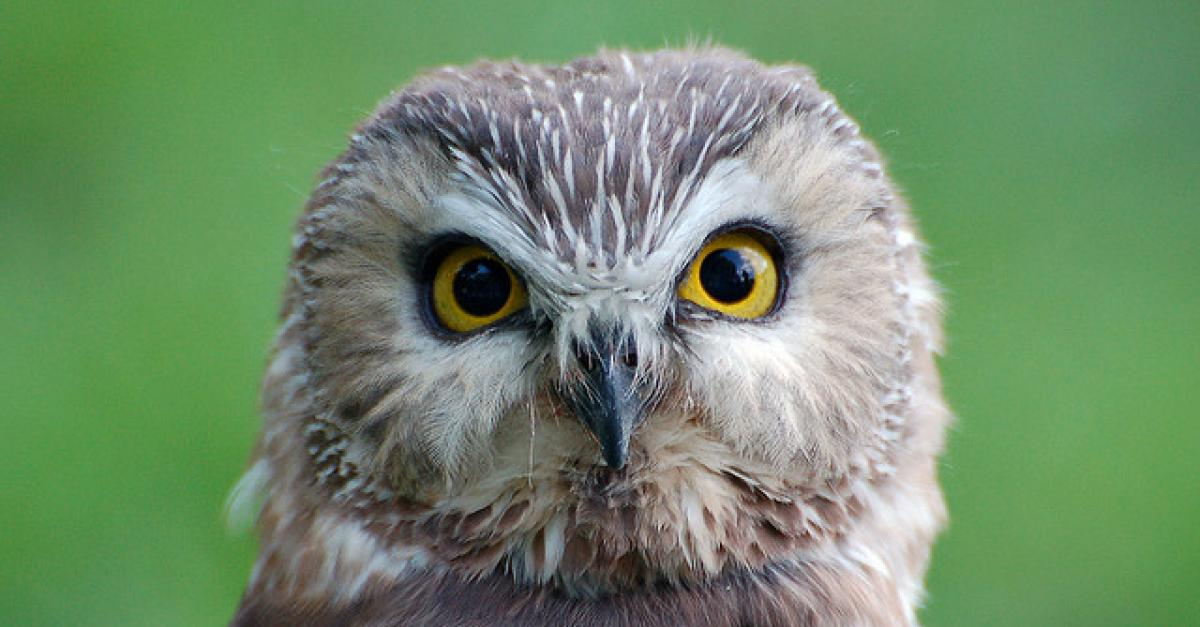Whose Hoo? Bird Expert Asks If You Can Identify Owl Calls
