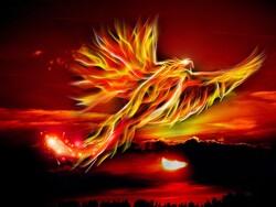 Phoenix Bird Illustration