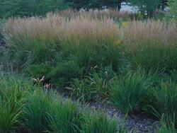 Rain garden at the University of Minnesota-Duluth