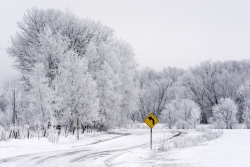 A road sign is featured against a contrasting background of snow-covered windy road with frost covered trees.