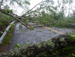 downed trees on road