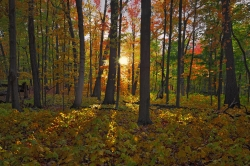 Wingra Woods, in the University of Wisconsin-Madison Arboretum