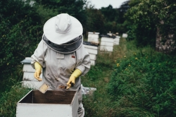 Beekeeper tending to a hive.