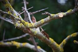 trimmed branch