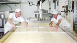 Two men in the process of making cheese