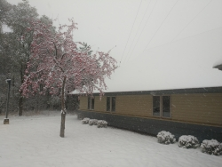 The ground, foliage and roof are lightly snow covered in front of a brown, one story building/