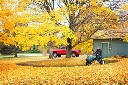 Mowing leaves.