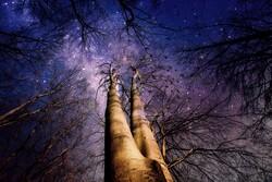 Starry night sky through trees.
