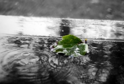 green leaf on rainy street