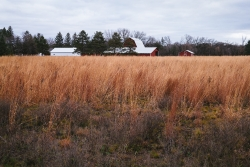 A rural field in the foreground with farm barns and buildings in the background.