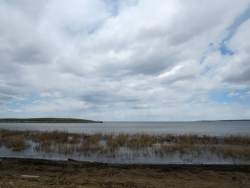 A picture taken from the shore of Green Bay with some tall grasses in the water in the foreground.