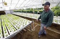 Farmer in his aquaponics greenhouse