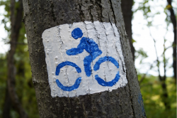 tree with bike sign painted on it