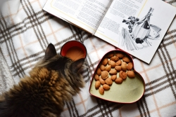 Cat looking at cookbook