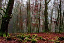 old forest