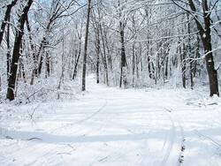 Wisconsin winter landscape