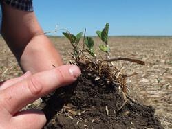 healthy soil, USDA NRCS South Dakota (CC-BY-SA).