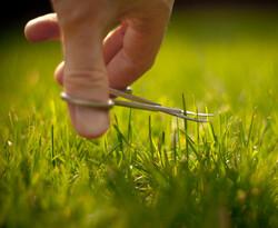 lawn, Jeremy Page (CC-BY-NC-SA)