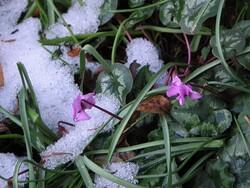 Melting snow on plants