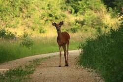 Deer, photo by Michael Leland