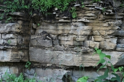 Exposed sedimentary rock wall.