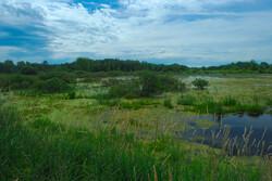 marsh in wisconsin