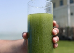 water sample with blue-green algae