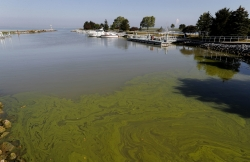 Algae bloom lake phosphorus