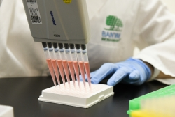 Scientist works with samples in lab