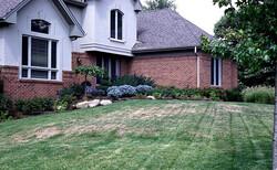 Chinch, lawn, lawn damage, brown spots